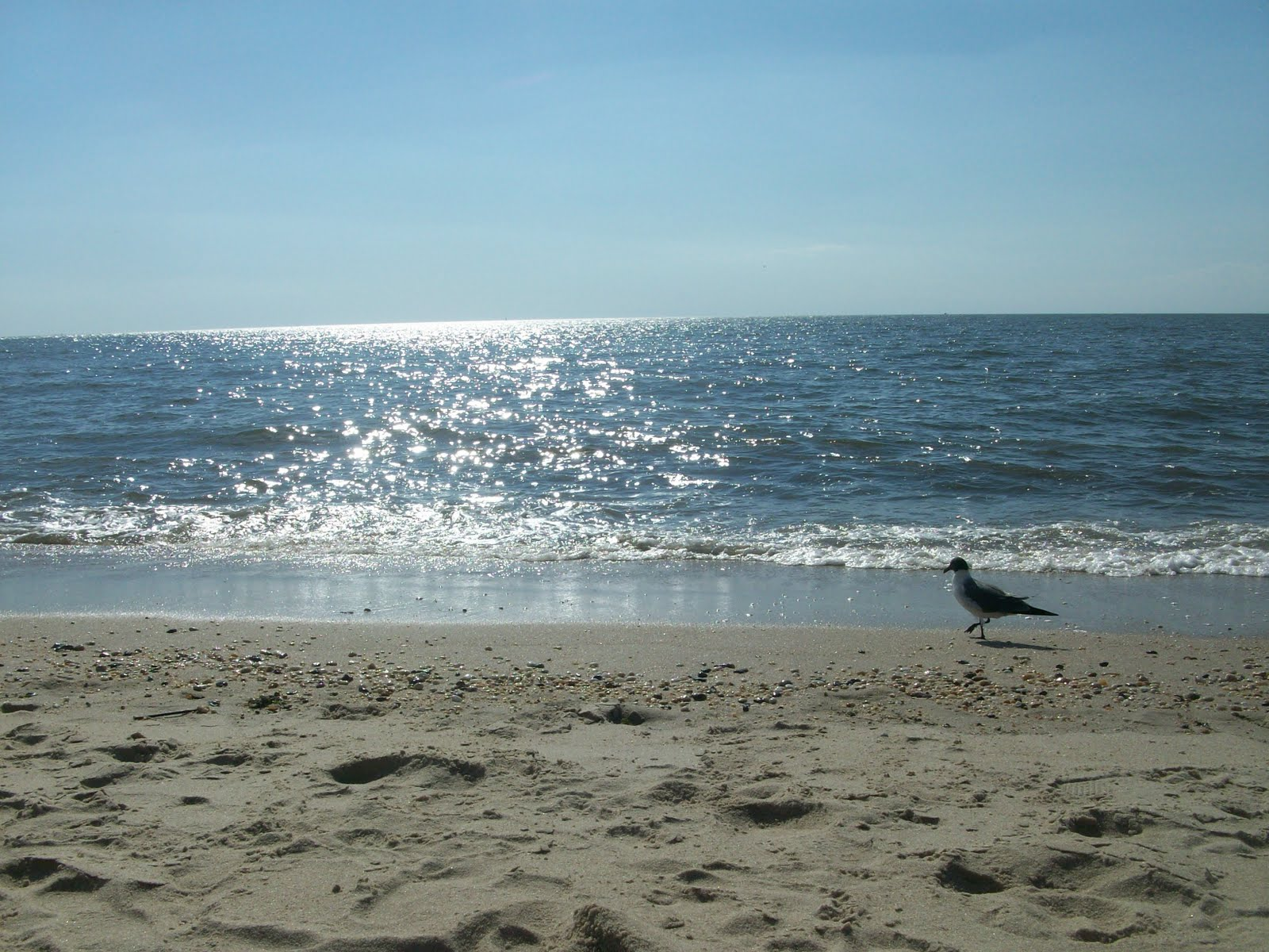 Secrets Of The Shore- New Jersey Beaches Pt 3  Brave New -7929