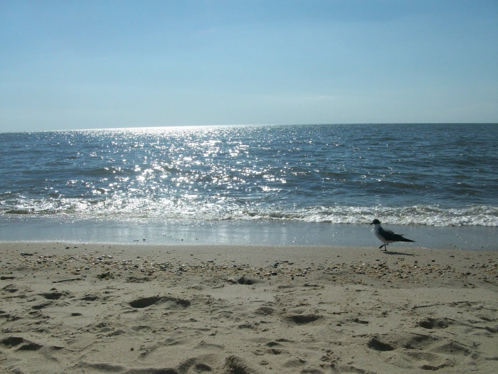 Secrets of the Shore- New Jersey Beaches Pt. 3 (1/4)