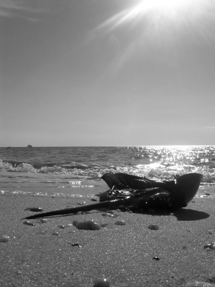 Secrets of the Shore- New Jersey Beaches Pt. 3 (4/4)