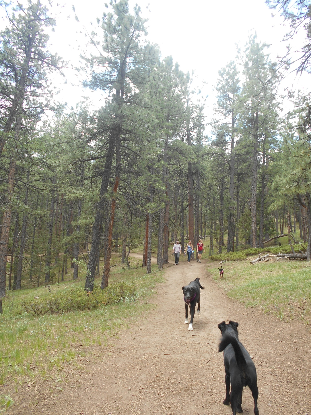 Hangin' with other dogs on the trail