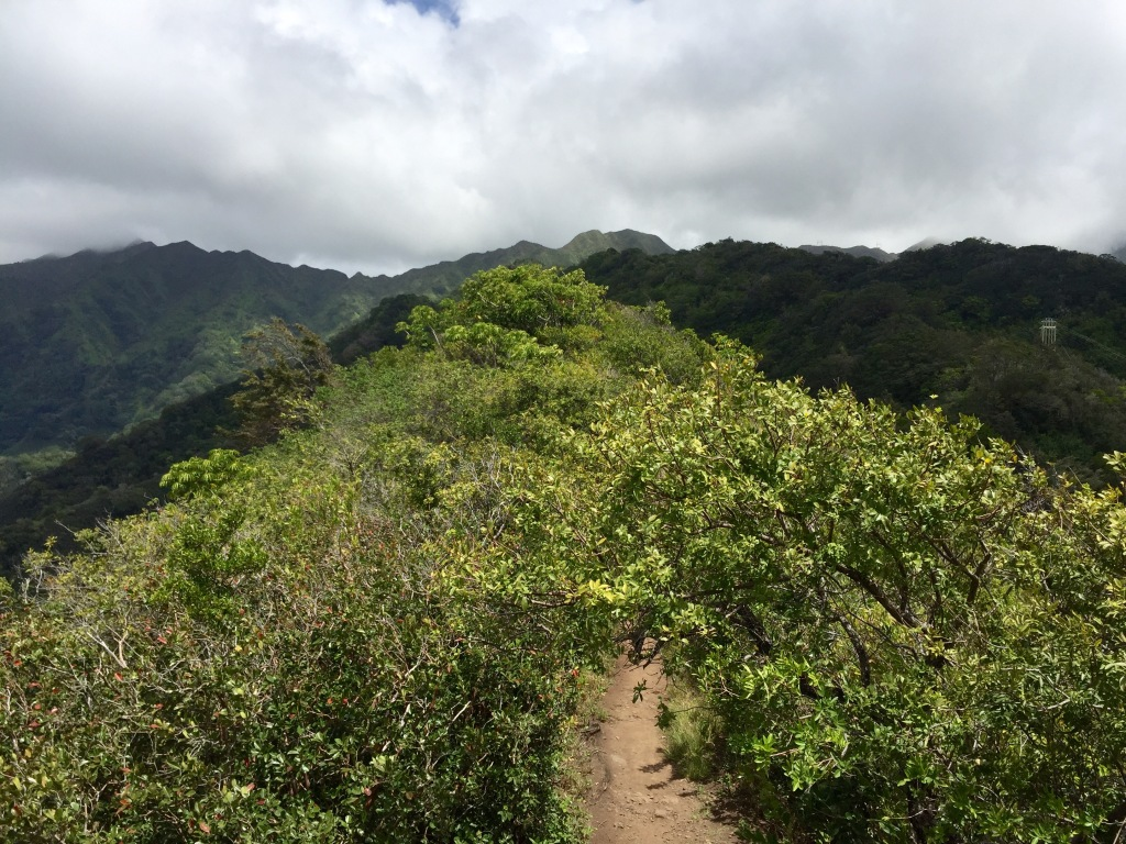 Through the thicket, onward and upward