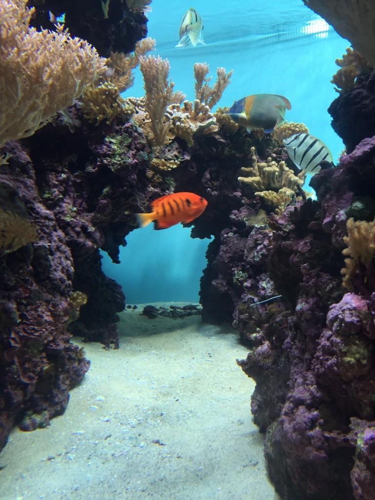 Hawaiian island reef life